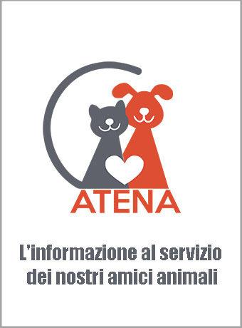 Logo-Atena-informazione